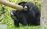 Zoo ZH